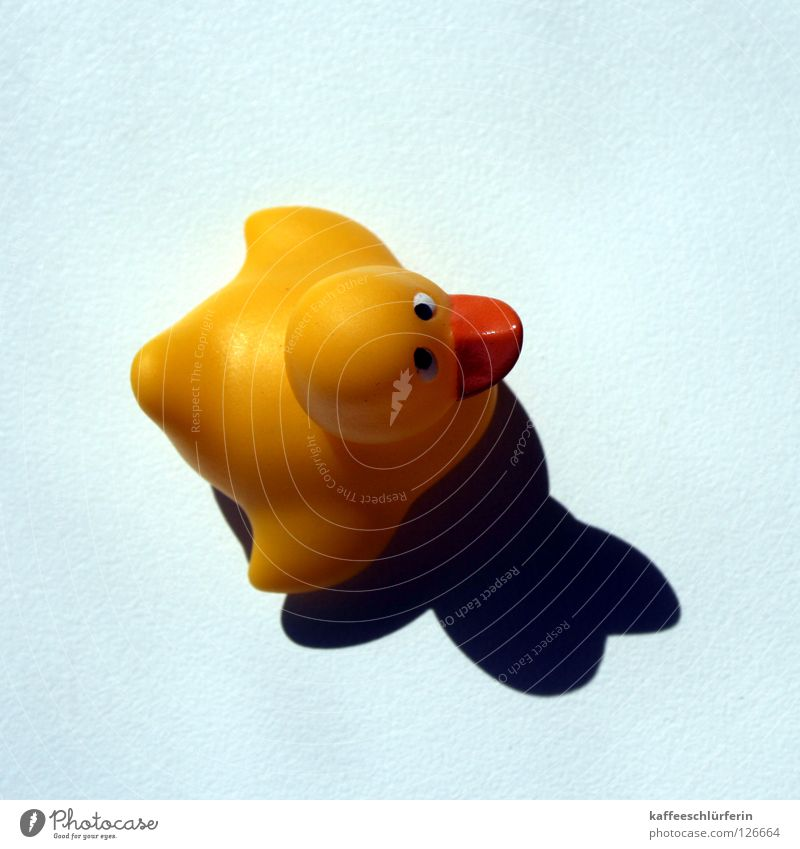 High Noon. Squeak duck Yellow Squint Bird's-eye view Decoration Duck Blue Shadow Perspective