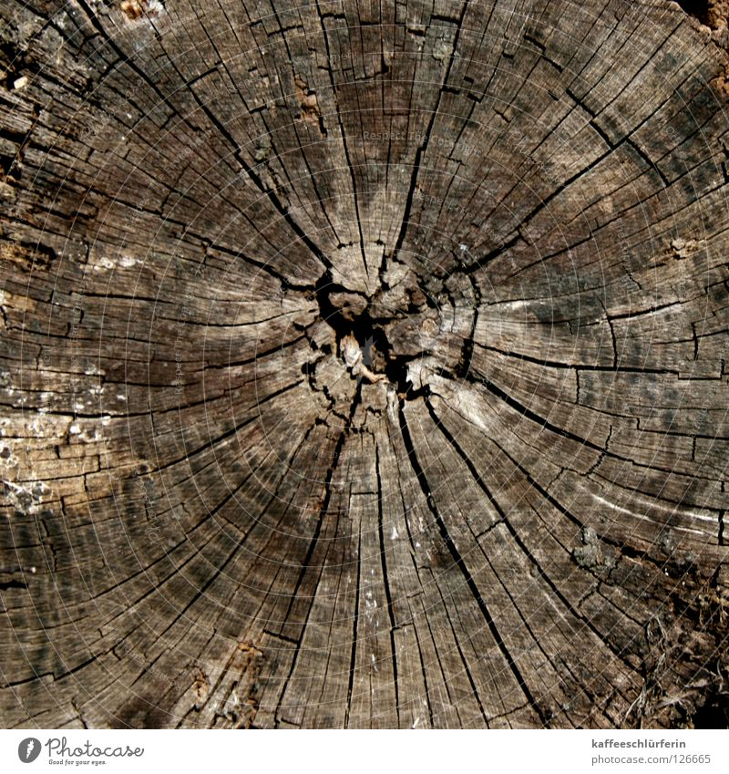 Old Tree Wood Brown Crack & Rip & Tear Fallen Annual ring Polarisation