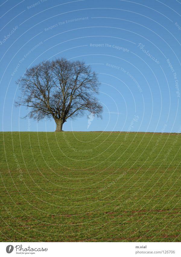 Nature Sky Tree Green Blue Loneliness Meadow Landscape Field