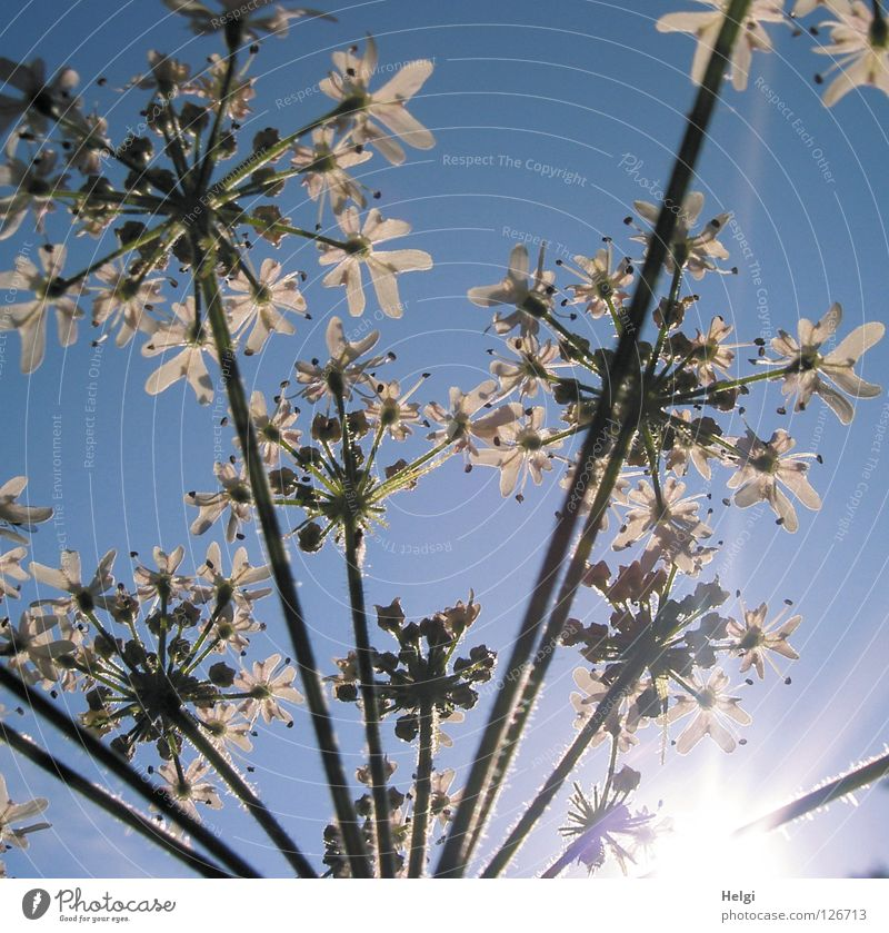 Nature Sky White Sun Flower Green Plant Summer Clouds Lamp Meadow Blossom Landscape Together Lighting Growth