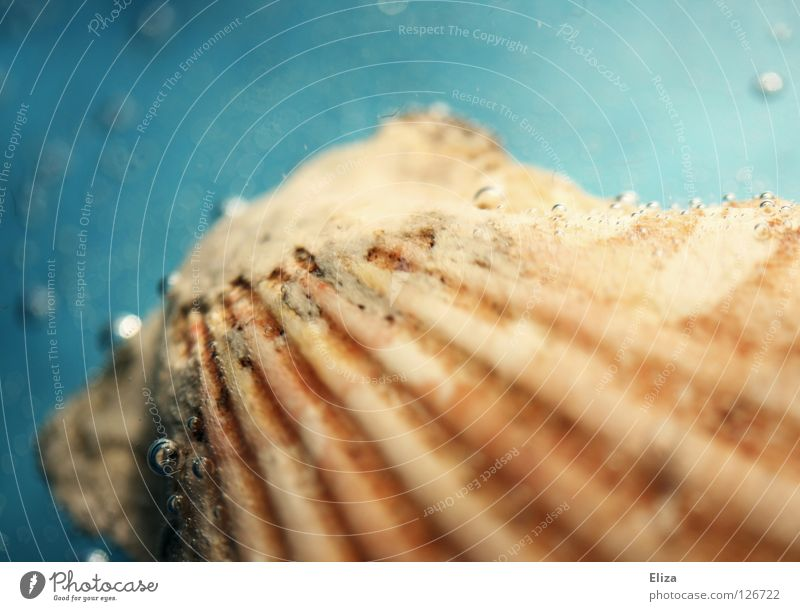 seashell Mussel Summer Vacation & Travel Ocean Bubble Bubbling Transparent Beautiful Decoration Beach Sand Souvenir Collection Seafood Drops of water Inject