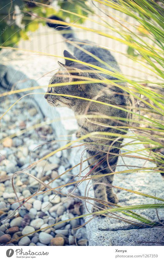 Cat Lola Garden Pet 1 Animal Curiosity Brown Gray green Watchfulness Observe Stone Colour photo Exterior shot Deserted Day Animal portrait Domestic cat Pelt