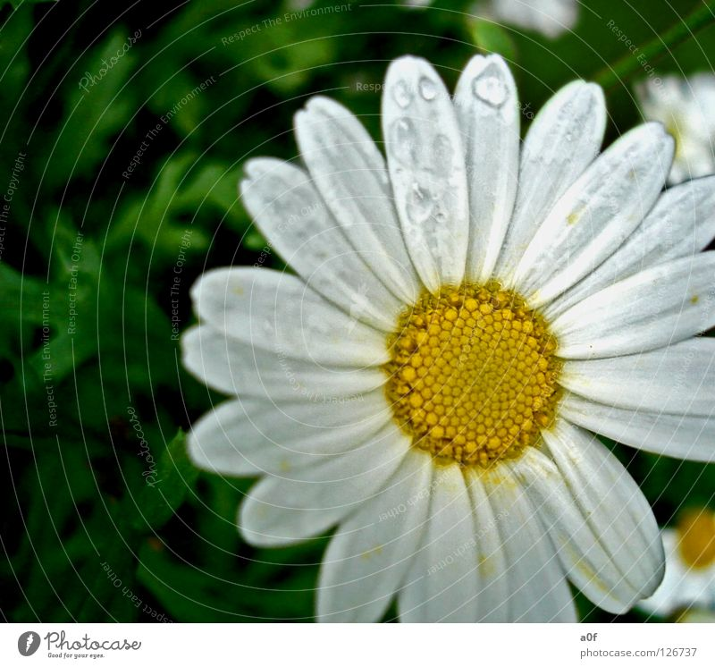 White Flower Green Yellow Spring Rain Drops of water Wet Damp Inject