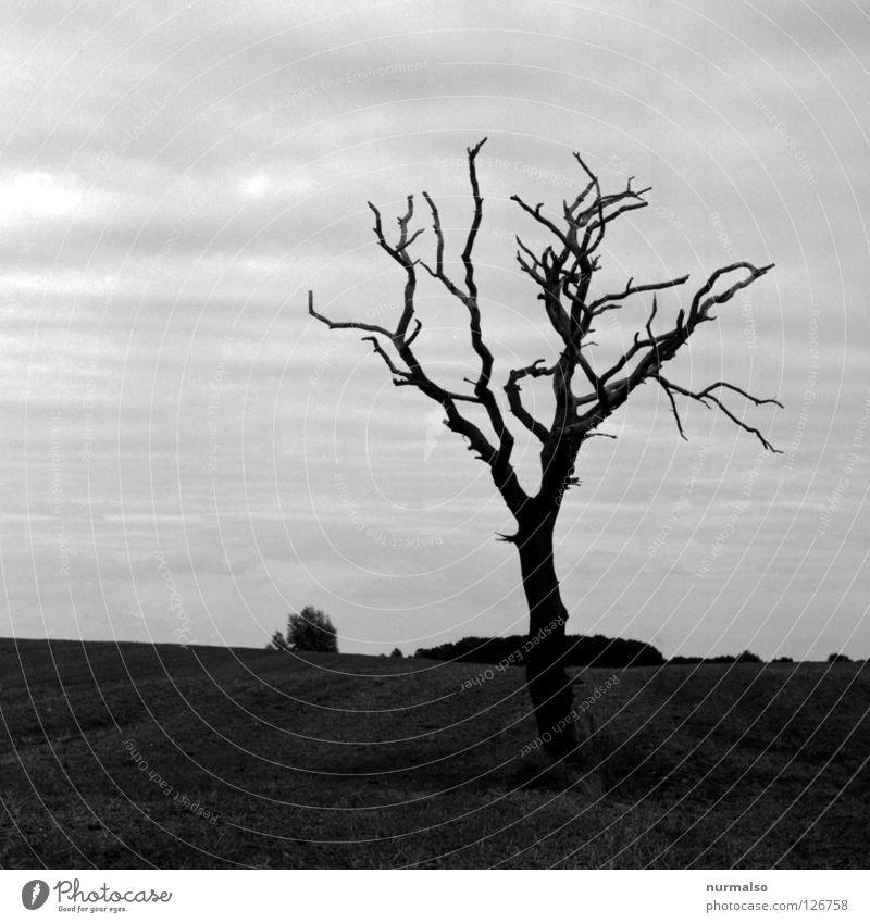 Sky Tree Black Loneliness Animal Far-off places Dark Emotions Death Wood Gray Lanes & trails Moody Field Horizon Earth