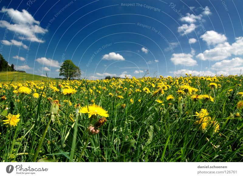 Sky Tree Flower Green Blue Summer Vacation & Travel Yellow Meadow Blossom Grass Spring Perspective Lawn Break Leisure and hobbies