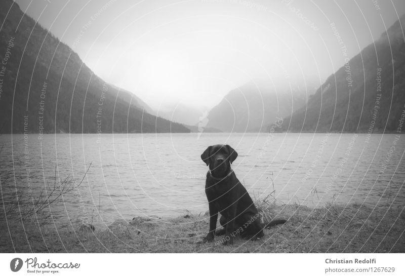 ... Fishing (Angle) Aquatics Nature Landscape Animal Water Spring Autumn Fog Rain Mountain Waves Lakeside Dog 1 Calm Black & white photo Exterior shot