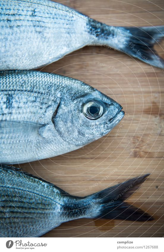 Animal Eating Food Fresh Nutrition Fish Gastronomy Restaurant Wooden board Diet Lunch Chopping board Banquet Buffet Brunch