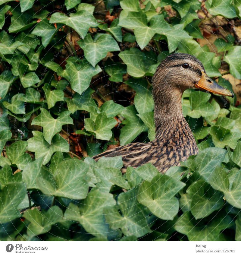 Ducktari Sweet Crisp Ivy Swallow Animal Nest Bird Garden Park Children's room Anger