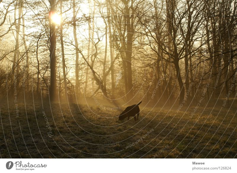 The early bird has gold in its mouth - or lead in its.... Dog Labrador Meadow Drop shadow Tree Back-light Tails Fishing rod Joy wag Silhouette Peace