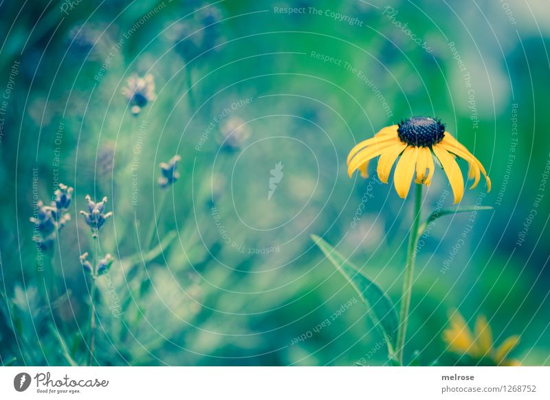Nature City Plant Green Beautiful Summer Relaxation Flower Leaf Black Yellow Blossom Style Park Dream Illuminate