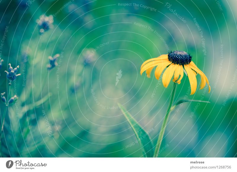 Nature City Plant Green Beautiful Summer Relaxation Flower Leaf Yellow Blossom Style Garden Contentment Illuminate Growth