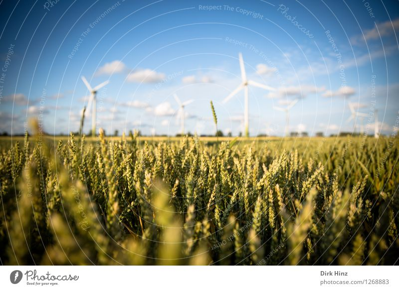 Sky Nature Blue Landscape Clouds Environment Coast Energy industry Field Gold Wind Technology Future Industry Agriculture Wind energy plant