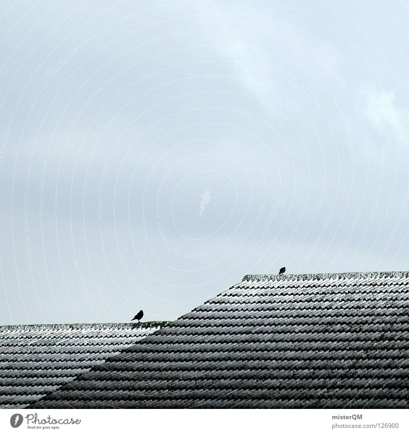 The roof of the world. I Cold Winter Roof Bird 2 Clouds Gray Dreary Lacking Brick Ice Simplistic Bad weather Decent Serene Empty Mountaineering Snow Shabby