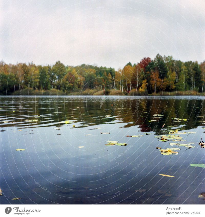 september Autumn October November Lake Leaf Deciduous forest Forest lake Surface of water Multicoloured Automn wood Autumnal colours Comfortless Medium format