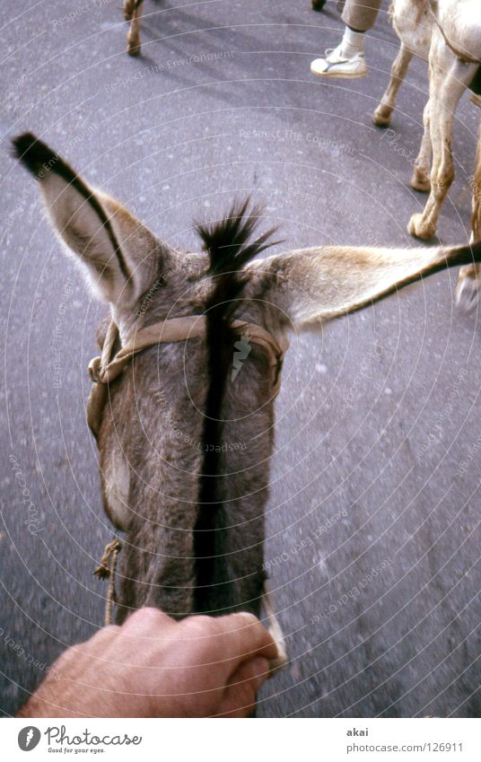 Landscape Walking Transport Adventure Desert Africa Pain Mammal Ferry Temple Egypt Equestrian sports Warped Donkey Impressive Horse's gait