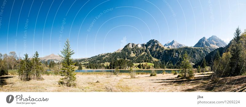 At Lake Lauenen Harmonious Contentment Relaxation Calm Summer Mountain Nature Landscape Autumn Beautiful weather Fir tree Common Reed Straw Grass Alps Peak
