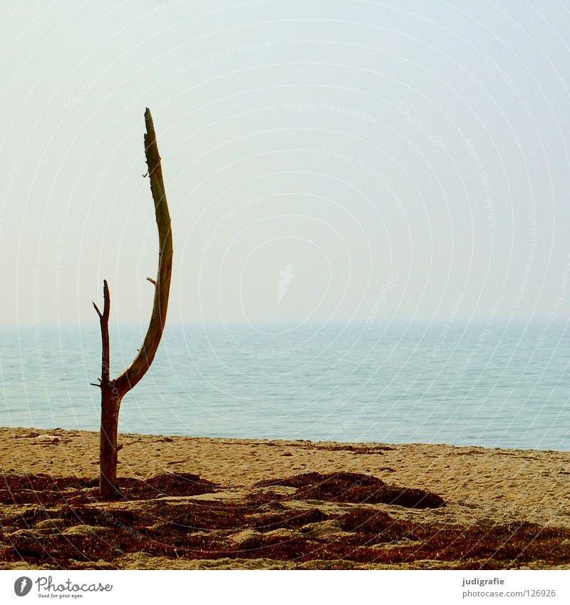 Nature Water Sky Tree Ocean Summer Beach Vacation & Travel Calm Colour Death Lake Warmth Sand Air Coast