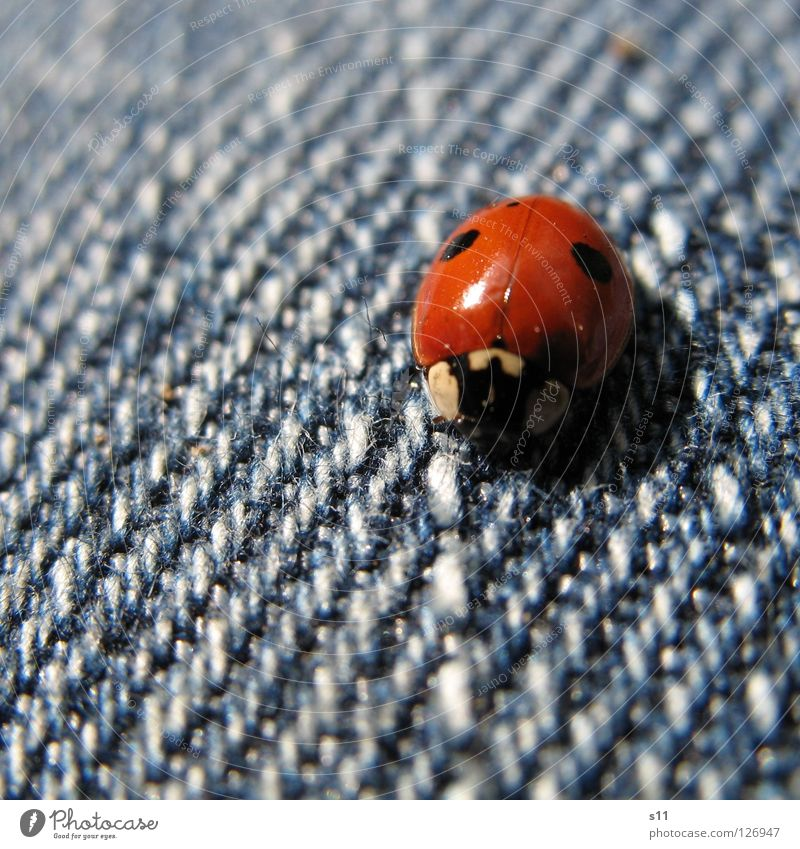 Nature Blue White Red Animal Happy Legs Clothing Desire Cloth Point Living thing Insect Pants Denim Beetle