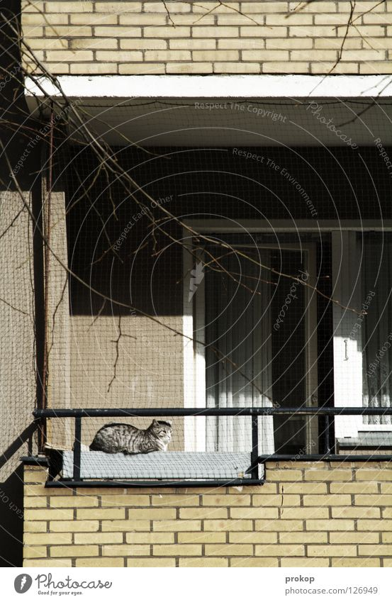 Cat Human being Joy Animal House (Residential Structure) Yellow Relaxation Architecture Gray Lie Sleep Gloomy Branch Idyll Brick Balcony