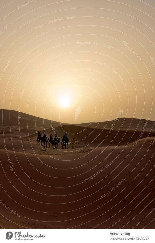 #700 - and off into the desert Human being Body Group Environment Nature Landscape Sand Sky Cloudless sky Sun Sunrise Sunset Sunlight Summer Weather