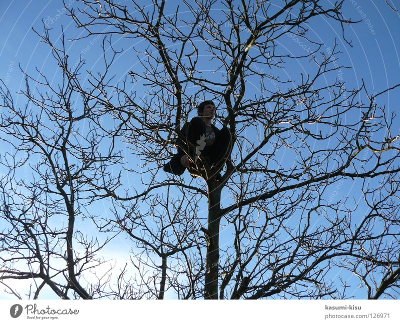 alone Tree Man Winter Brown Loneliness Trust Branch Sky Climbing Blue