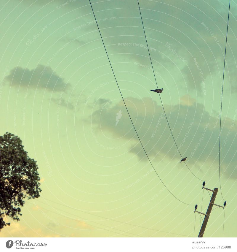 attempted rapprochement Electricity Cable Together Overhead line Bird Clouds Flirt Peace power supply Energy industry Connection Sparse Dusk Approach Society