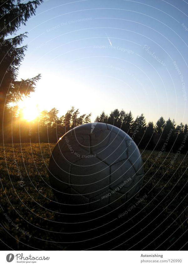 Sun Dark Meadow Soccer Moody Ball Leather Dazzle Coniferous trees