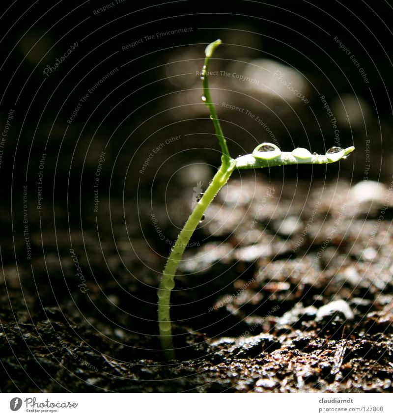Nature Green Plant Life Small Drops of water Rope Growth Delicate Agriculture Biology Birth Graceful Fragile Sowing Pepper