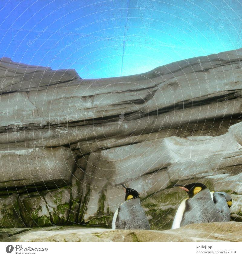 Sky Nature Water Ocean Animal Coast Stone Art Bird Rock 3 Multiple Fish Dive Americas Beak