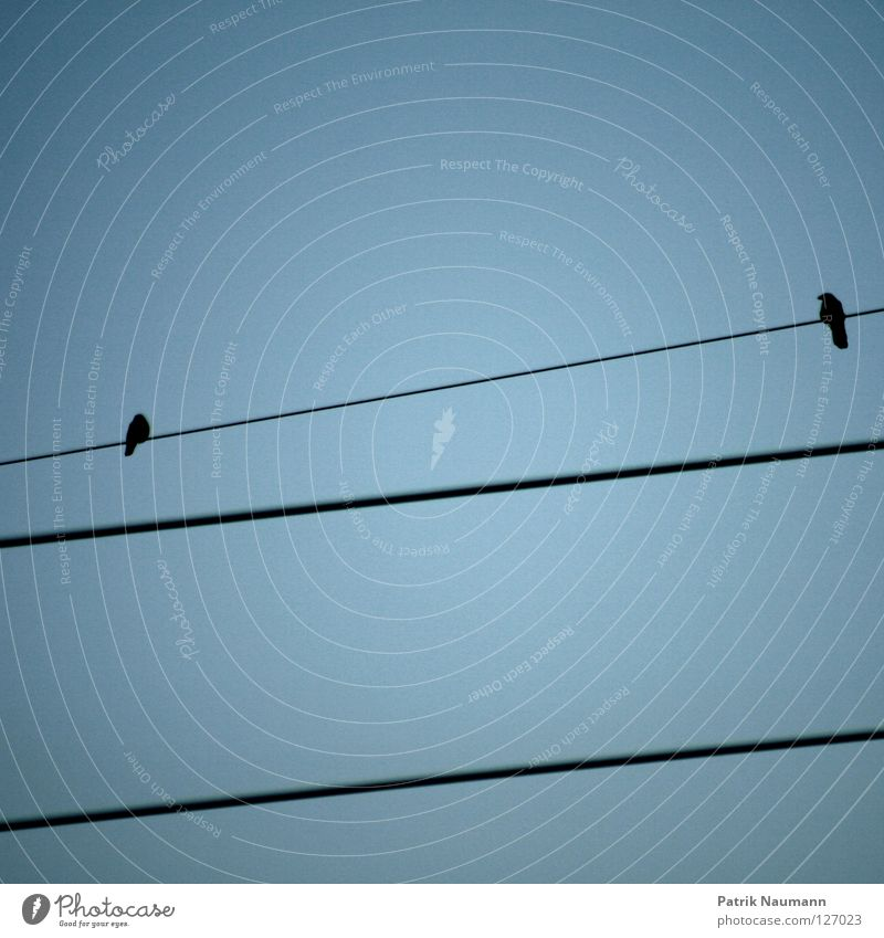 Sky Blue 2 Bird Pair of animals Flying Tall Electricity In pairs Electricity pylon Heavenly Floating