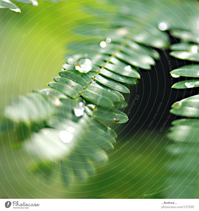 Nature Plant Beautiful Green Colour Joy Dark Environment Emotions Rain Dream Glittering Growth Fresh Elegant Modern