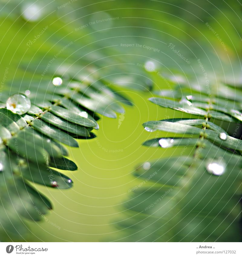 Nature Plant Beautiful Green Colour Joy Dark Environment Emotions Rain Dream Glittering Growth Fresh Elegant Modern