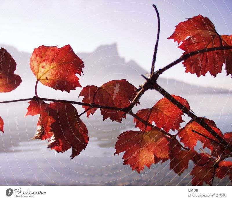 Sky Blue Red Leaf Far-off places Autumn Mountain Gray Lake Landscape Brown Orange Coast Fog Horizon Near