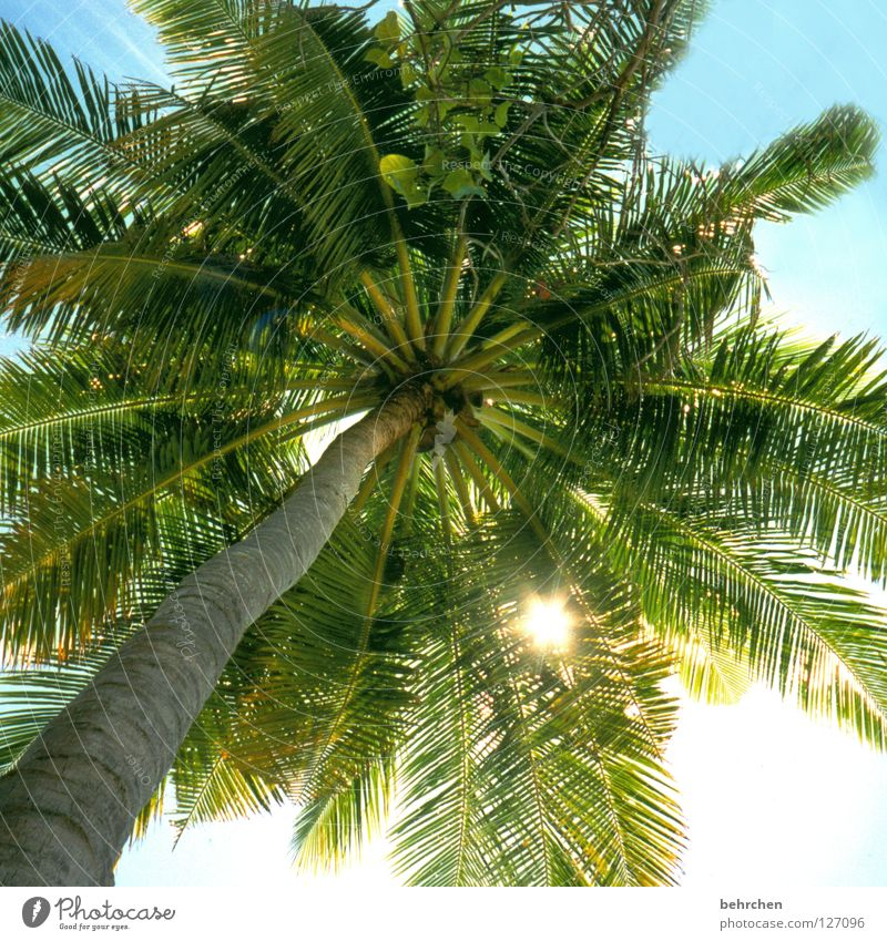 my parasol Colour photo Back-light Vacation & Travel Summer Sun Sunbathing Ocean Island Sky Leaf Coast To enjoy Dream Green Maldives Palm tree Palm frond