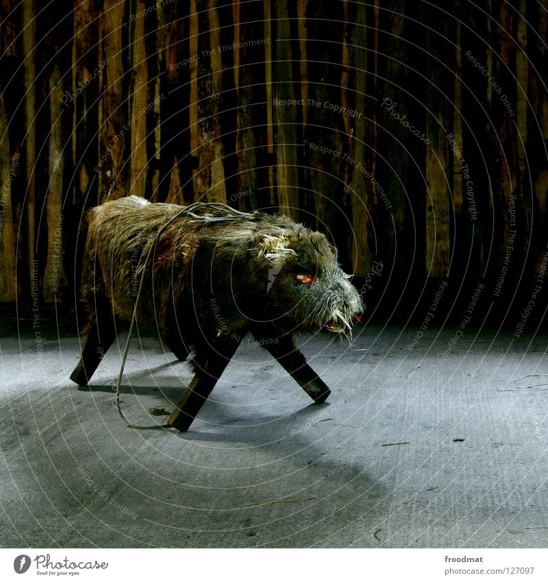 Animal Death Dark Funny Pelt Creepy Furniture Whimsical Seating Animalistic Surrealism Mammal Swine Object photography Bushy