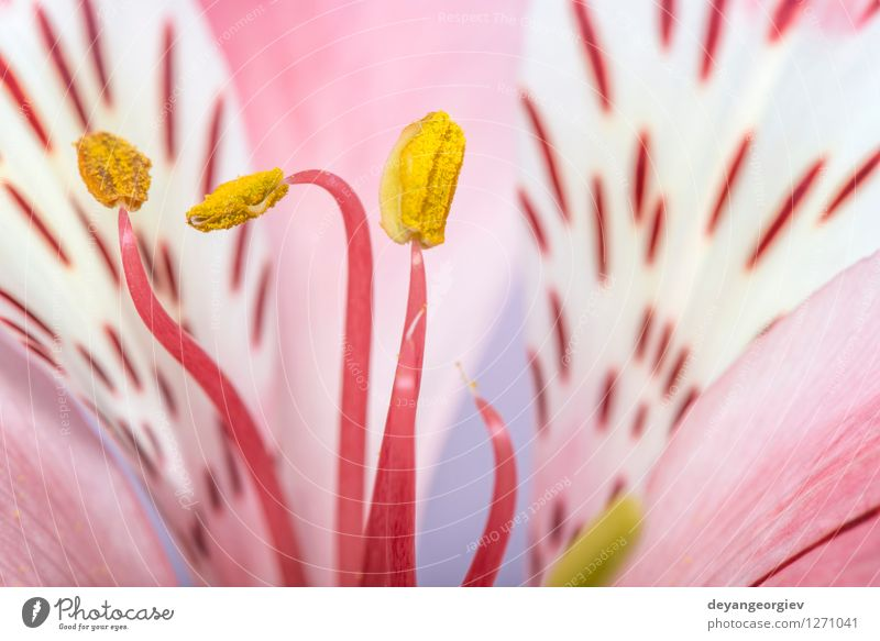 Macro shot flower Nature Plant Beautiful Colour Summer White Flower Red Yellow Blossom Natural Garden Pink Fresh Beauty Photography Botany