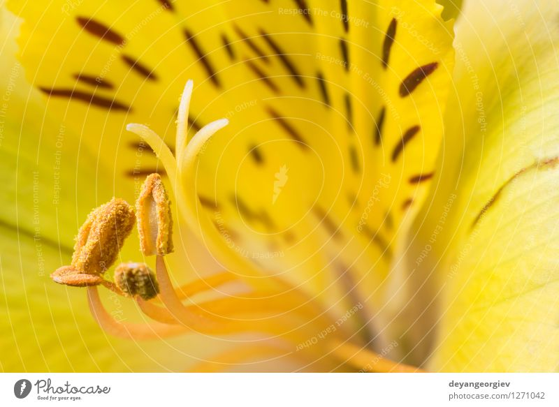 Macro shot flower Beautiful Summer Garden Nature Plant Flower Blossom Fresh Natural Yellow Pink Red White Colour close up background Beauty Photography Lily