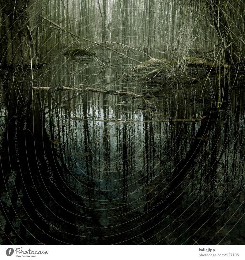 missisipi burningburg Marsh Mud Bog Peat Pond Habitat Bog body Monster Mystic Green Alternative Wetlands Scandal Sensation Clarify Witch Body of water Spree