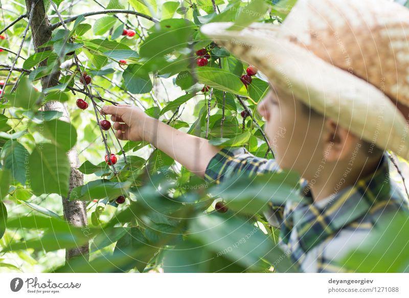 Child harvesting Morello Cherries Child Nature Green Summer Tree Hand Red Joy Girl Eating Small Family & Relations Garden Fruit Fresh Infancy