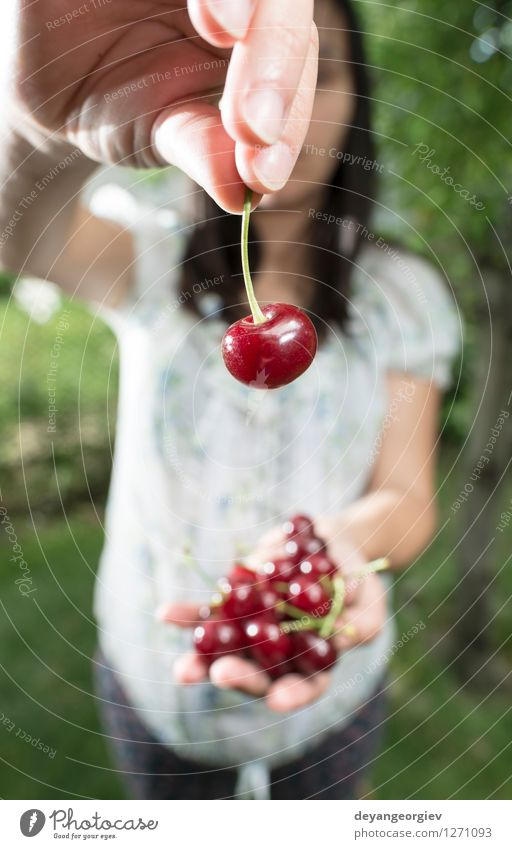 Woman picking cherries with basket Nature Plant Green Beautiful Summer White Hand Red Girl Adults Natural Garden Fruit Fresh Harvest