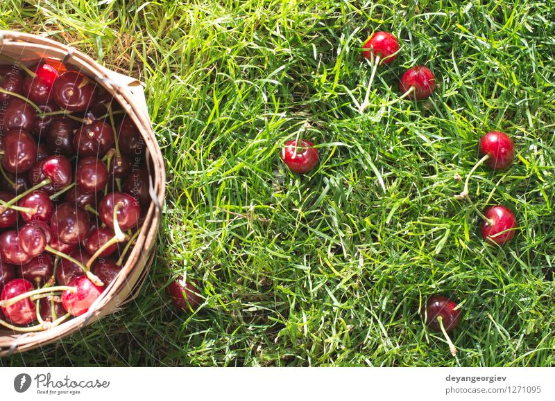 Morello Cherries in basket on green meadow Fruit Beautiful Summer Garden Gardening Nature Grass Leaf Meadow Fresh Natural Juicy Green Red Basket Cherry morello