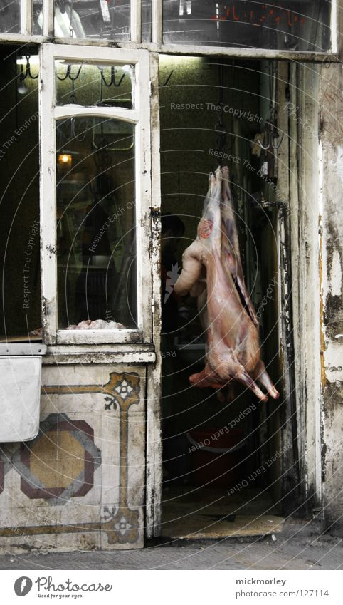 hanging sow Sow Swine Trunk Bristles Butcher Pork Hang Shop window Exhibition Stomach Intestine Dirty Disinfection Clean Bacterium Mammal Death Agriculture