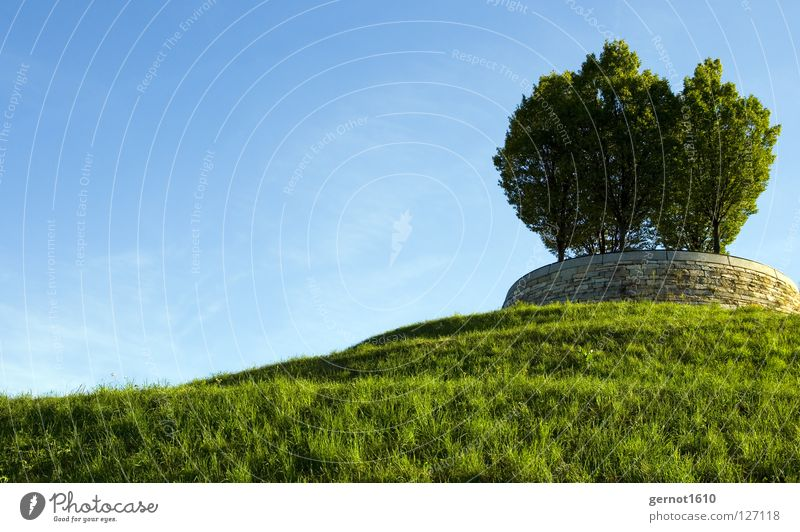 For Bill Surface Tree Hill Summer Background picture Green Meadow Garden Park Decoration windows XP 2003 3.1 95 98 vista bill Gate microsoft Landscape Blue Sky