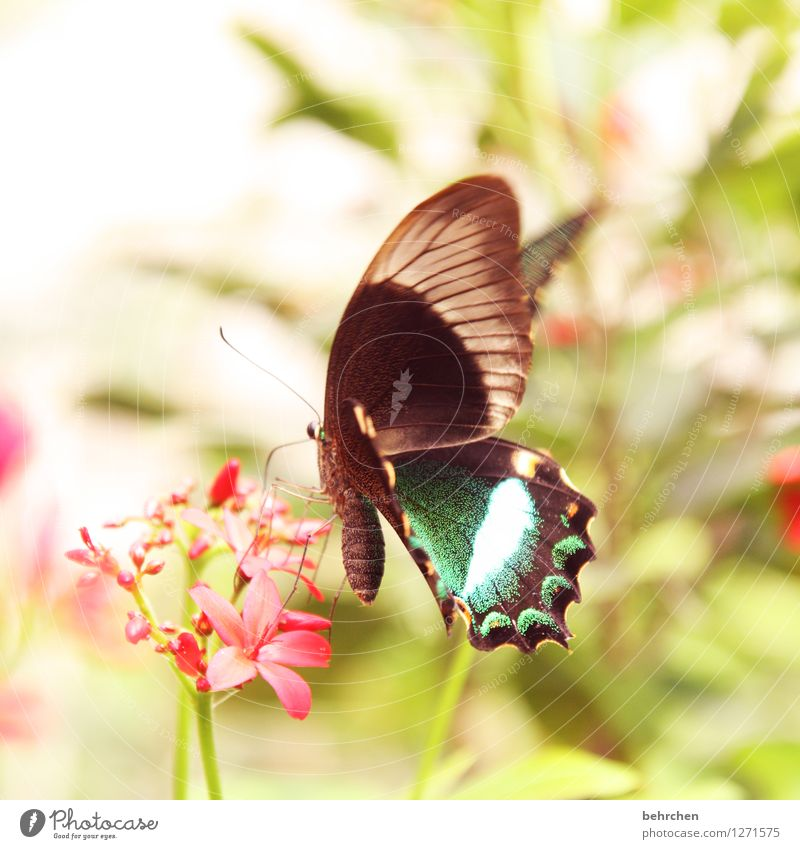 pretty - prettier - prettiest Nature Plant Animal Spring Summer Flower Leaf Blossom Garden Park Meadow Wild animal Butterfly Wing 1 Blossoming Flying To feed