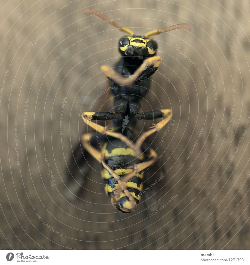 wasp life Nature Animal Wild animal Dead animal Animal face Wing 1 Moody Yellow Black Wasps Feeler Fear Threat Wasps' nest Spine Colour photo Close-up Detail