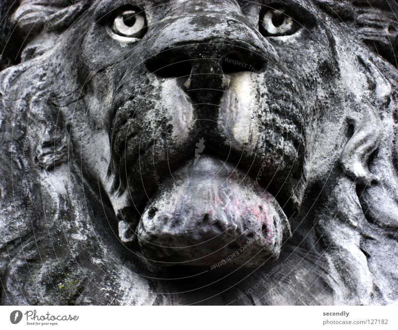 lurking lion Lion Gray Statue Glass eye Acid rain Cavernous Snout Grief Bleached Middle Animal Detail Stone Minerals Transience Old Sadness