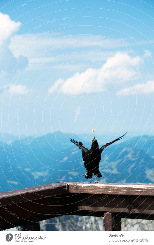 I got it. Environment Nature Landscape Air Sky Clouds Summer Beautiful weather Hill Rock Alps Mountain Animal Bird Wing 1 Movement Catch Aim Legs mountain bird