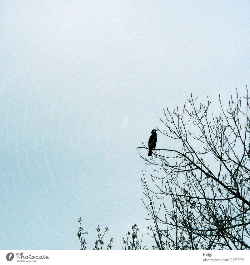 Sky White Tree Blue Black Clouds Above Spring Gray Feet Bird Metal Coast Glittering Flying Large