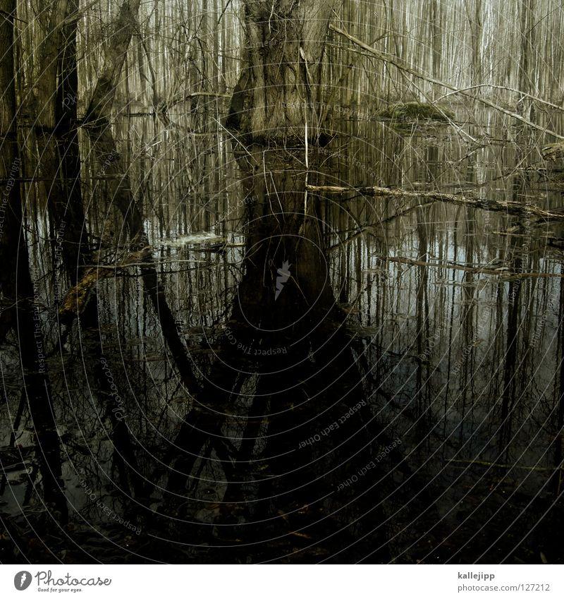 drug marsh Marsh Mud Bog Peat Pond Habitat Bog body Monster Mystic Green Alternative Wetlands Scandal Sensation Clarify Witch Body of water Spree Brandenburg