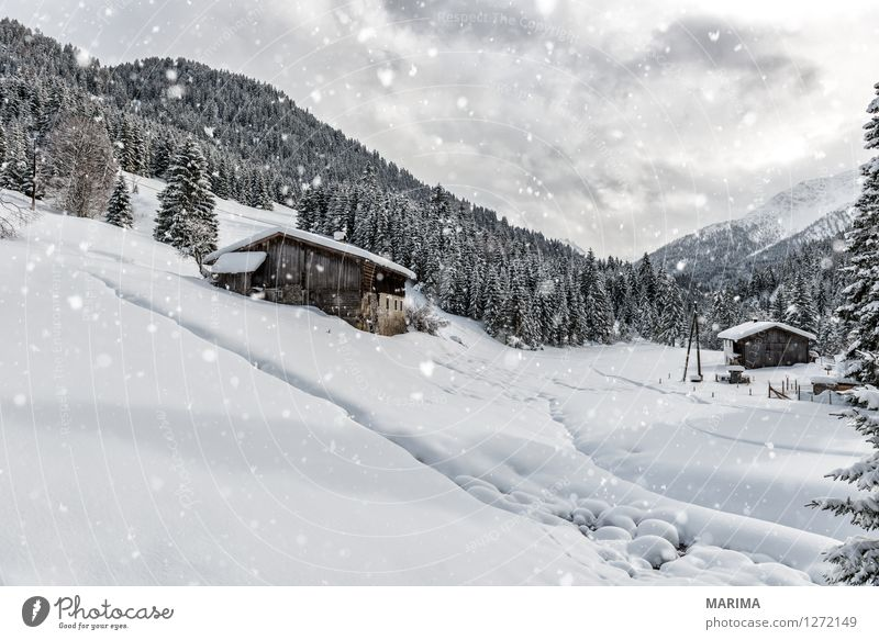 Nature White Landscape Calm Clouds Winter Cold Mountain Germany Europe Alps Austria Snowflake Federal State of Tyrol Lechtal
